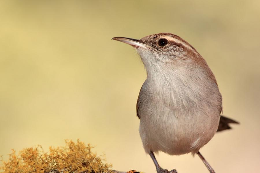 Concurso Ornitológico Ciudad de Lebrija